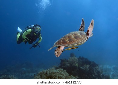 Diver and tourtle swimming in Bohol sea