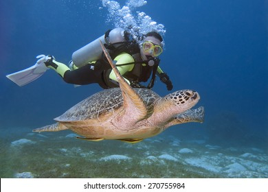 Diver and turtle swimming in Bohol sea