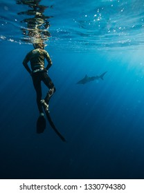diver with underwater photo equipment and grey reef shark