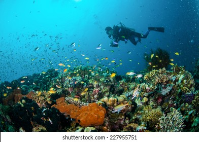 Diver and various reef fishes swim above coral reefs in Gili Lombok Nusa Tenggara Barat Indonesia underwater photo. There are Spotfin squirrelfish Neoniphon sammara, sponges and anthias