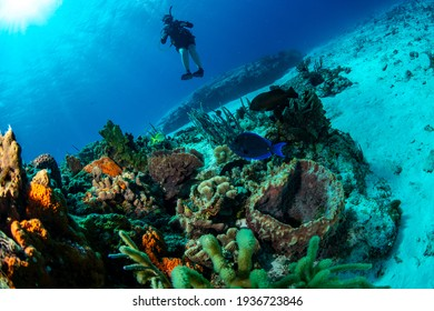 Diver watching the fish on the reef