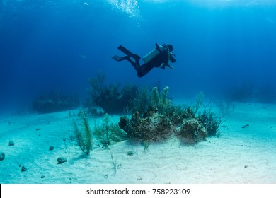 A diver watching the Sharks coming in to the dive site