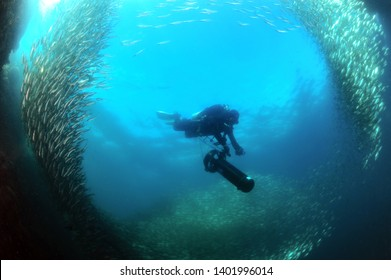A diver who goes underwater on a scooter through a school of sardines.