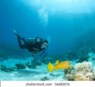 diver with yellow box fish