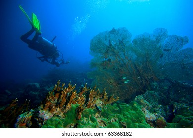 Diver yellow fin and sea fan