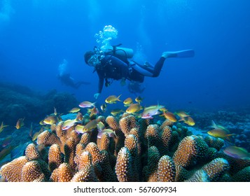Diver,coral and fish, Raja Ampat. Indonesia.