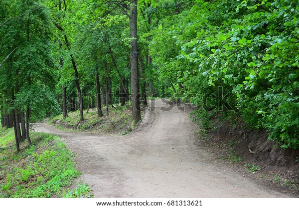 Divergence of paths in the forest. Crossroads among many trees