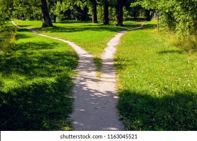 The divergence of paths in the park, the summer landscape