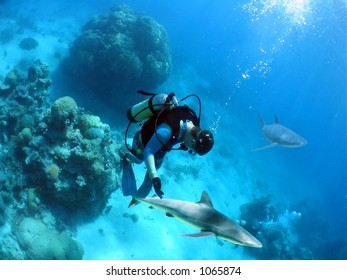 Divers being circled by sharks