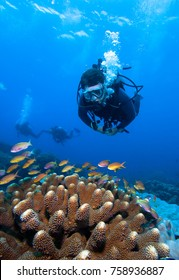 Divers, coral and fish