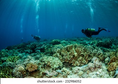 Divers and mushroom leather corals in Banda, Indonesia underwater photo. Divers swimming above mushroom leather Sarcophyton sp.