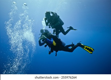 Divers on the blue background