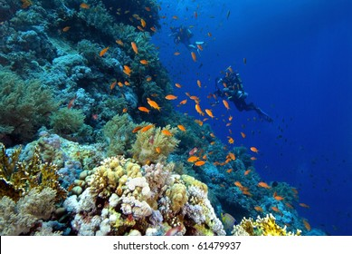 """ divers on a colorful reef in the Red Sea"