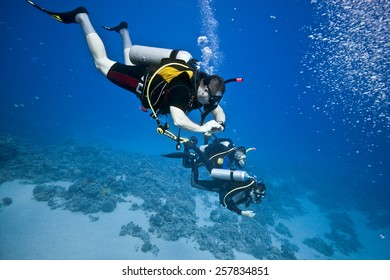 Divers on the coral reef