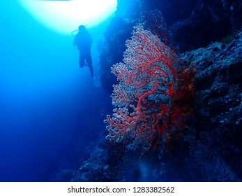 Divers Scuba dive in Rabaul , East New britain