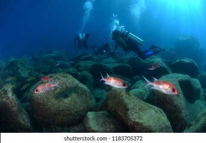 Divers and Squirrelfish, Noronha, Brazil
