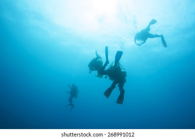 Divers up to the surface.