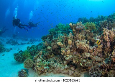 Divers swim past beautiful coral reef underwater in the Red Sea, Egypt