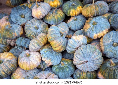 Diverse assortment of pumpkins as  background texture. Autumn harvest.