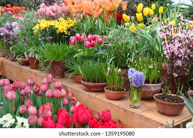 A diverse collection of tulips.Different shapes and colors of flowers.Beauty in plants.