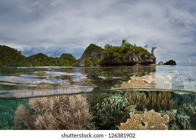 A diverse coral reef grows in the shallows of a lagoon in Raja Ampat, Indonesia.  This area is known as the heart of marine biodiversity and is within the Coral Triangle.
