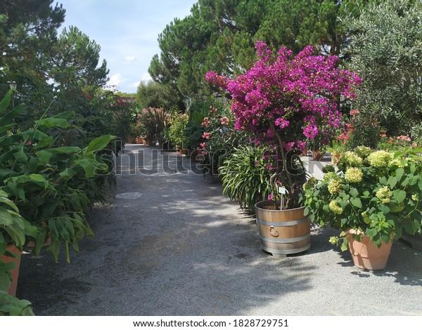 diverse-flowers-plants-island-mainau-600