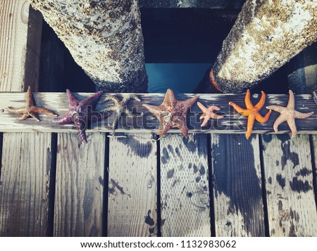 A diverse group of starfish lined up along the docks of Comox, British Columbia, Canada.