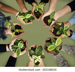 Diverse hands holding a plant on a hands