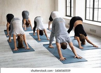Diverse young people practicing yoga at group lesson, doing Downward facing dog exercise, practicing yoga, standing in adho mukha svanasana pose, working out in modern yoga studio with instructor