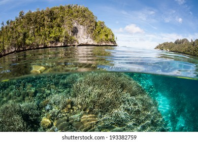 A diversity of corals grow near limestone islands in Raja Ampat, Indonesia. This large area is the heart of the Coral Triangle and relatively unexplored.