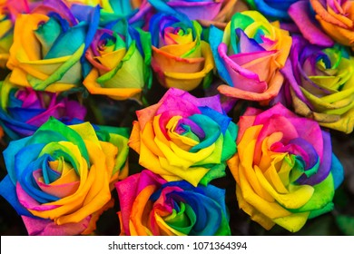 Diversity, joy, LGBT, rainbow, flowers, gender equality background. Colorful variety of roses of all colors of the rainbow as a floral background or texture.