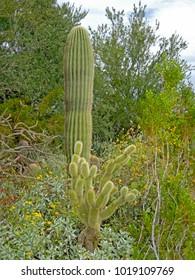 The diversity of plants at the Phoenix Desert Botanical Garden is a rich source of wonder and beauty for both botanists and photographers.