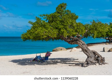 Divi Divi tree against the turquoise water of the Caribbean Sea in the famous Eagle Beach, Aruba.