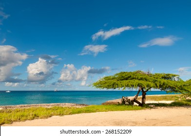 Divi-divi tree on Aruba. Tropical sea beach.