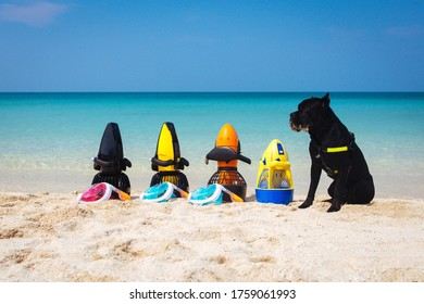 Diving equipment. Dog guards underwater scooter on the beach