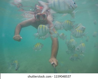 diving with fish from the natural pools of Porto de Galinhas, Pernambuco, Brazil