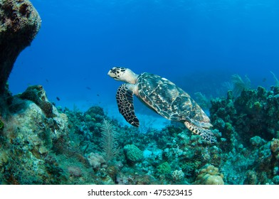 Diving Life on Grand Cayman