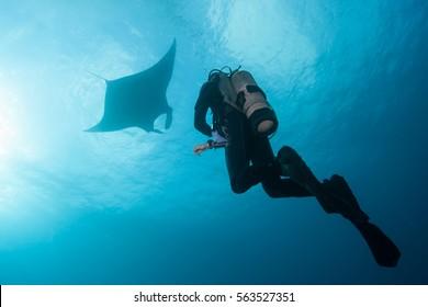 Diving with Manta Ray