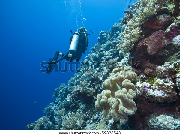 diving on the great barrier reef in Queensland Australia