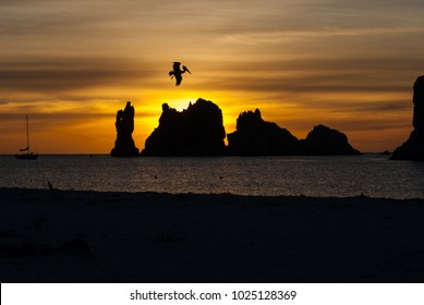 Diving pelican silhouetted against sunrise with silhouette of sailboat and rock islands in Baja California Sur, Mexico.