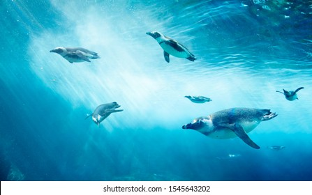 Diving penguin herd. Ocean underwater with marine animals. Sun rays passing through the water surface.