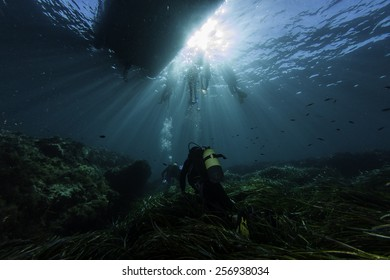Diving in the posidonia