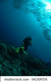 Diving with school of jack fish