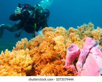 diving videograph, undersea Philippines