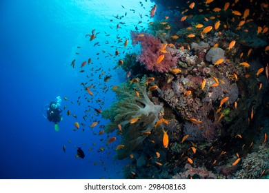 Diving the wall, Red Sea, Egypt
