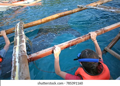 Diving in with whale sharks near the small barangay Tan-awan near Oslob, in the Philippines