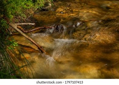 Divokly creek near Kouty nad Desnou village in summer day in forest