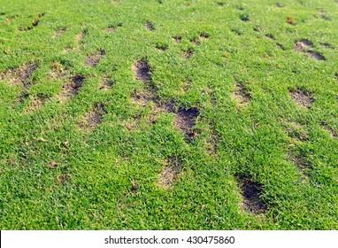 divots-green-grass-fairway-golfers-260nw-430475860.jpg