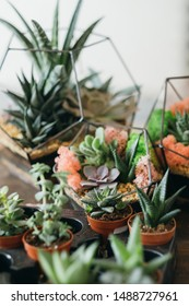 DIY florarium. Collection of green succulents growing in glass geometric vases and pots.