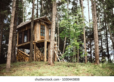 Diy small majestic wood house in forest. Big windows for watching forest animals.